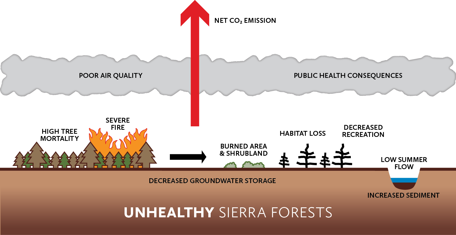 Unhealthy forests are too dense with greater risk for high tree mortality and severe fire. This eventually results in negative impacts: forests converting to burned area and shrubland, habitat loss, decreased recreation, poor air quality, public health consequences, net carbon dioxide emission, decreased groundwater storage, increased sedimentation in rivers, and low summer water flow.
