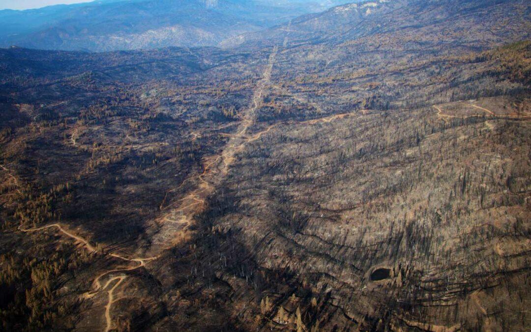 2020 (mega) wildfire season