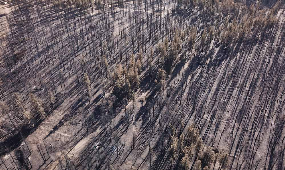 aerial image of charred trees, most of which look like match sticks