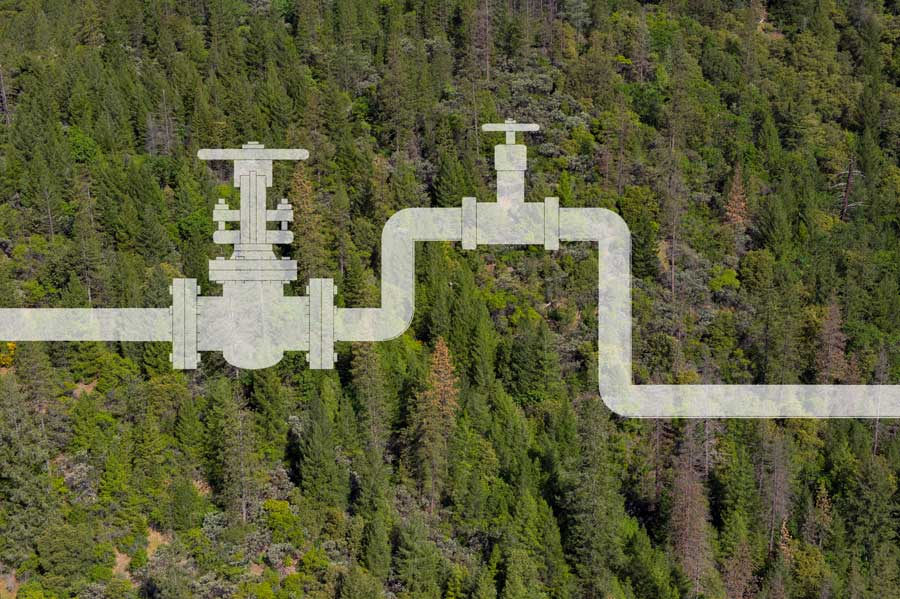 Forest health project pipelines can deliver regional resilience