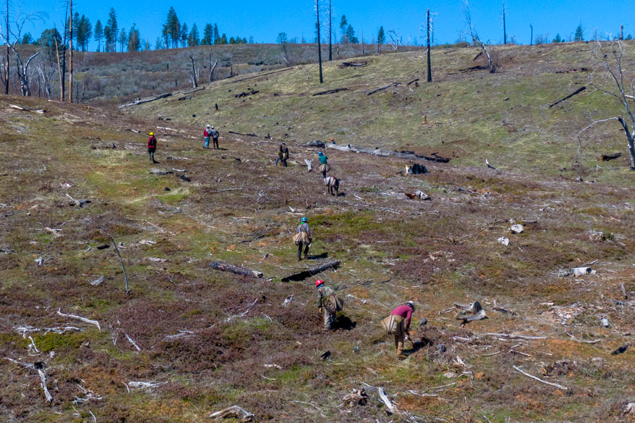aerial view of barren landscape with several workers bending over to plant trees