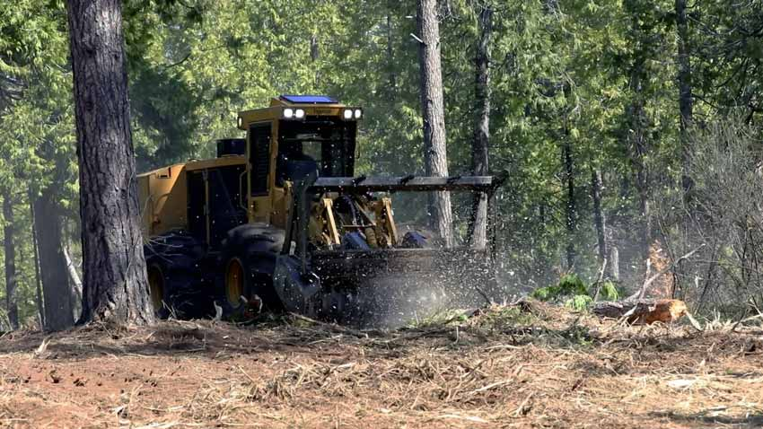 active bulldozer surrounded by trees